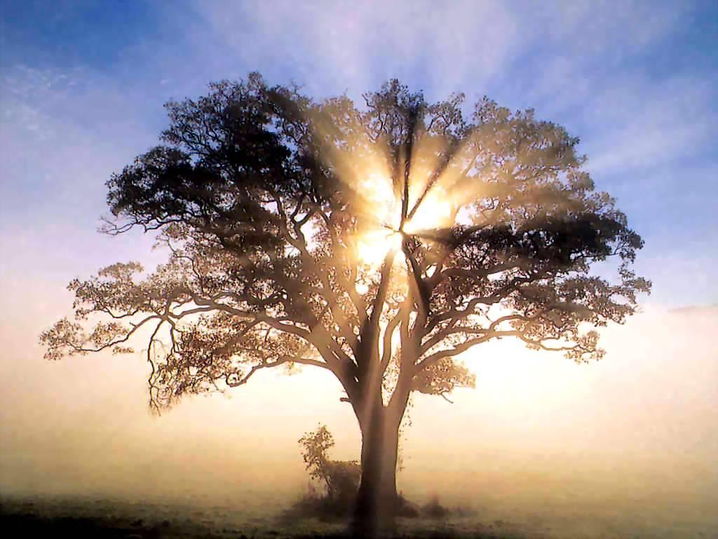 spiritual-abundance_tree-with-sunshine1
